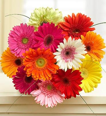 Happy Gerbera Daisy Bouquet